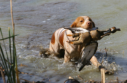 working_gundogs2