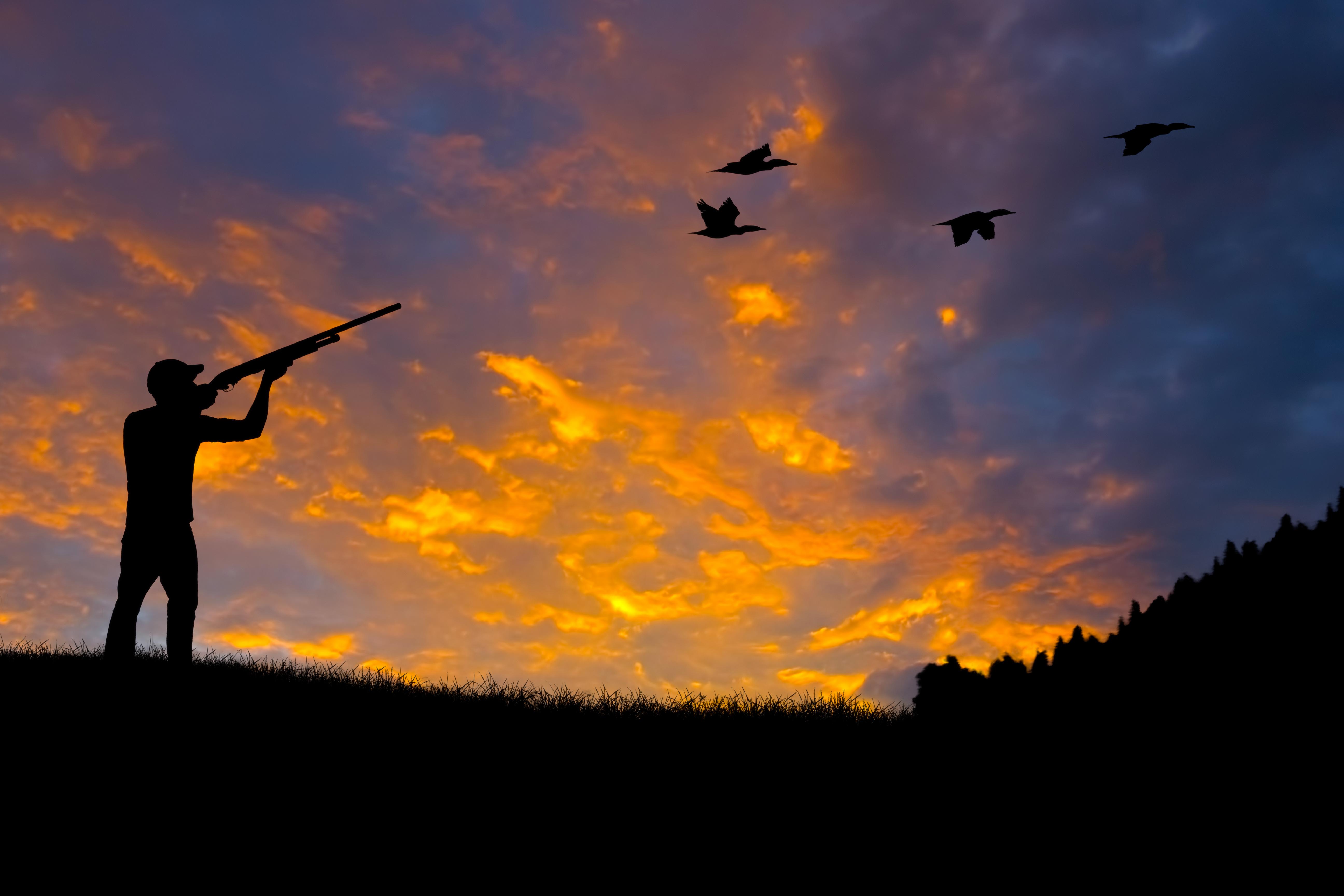 Bin Heart Morass ducks: EPA advice