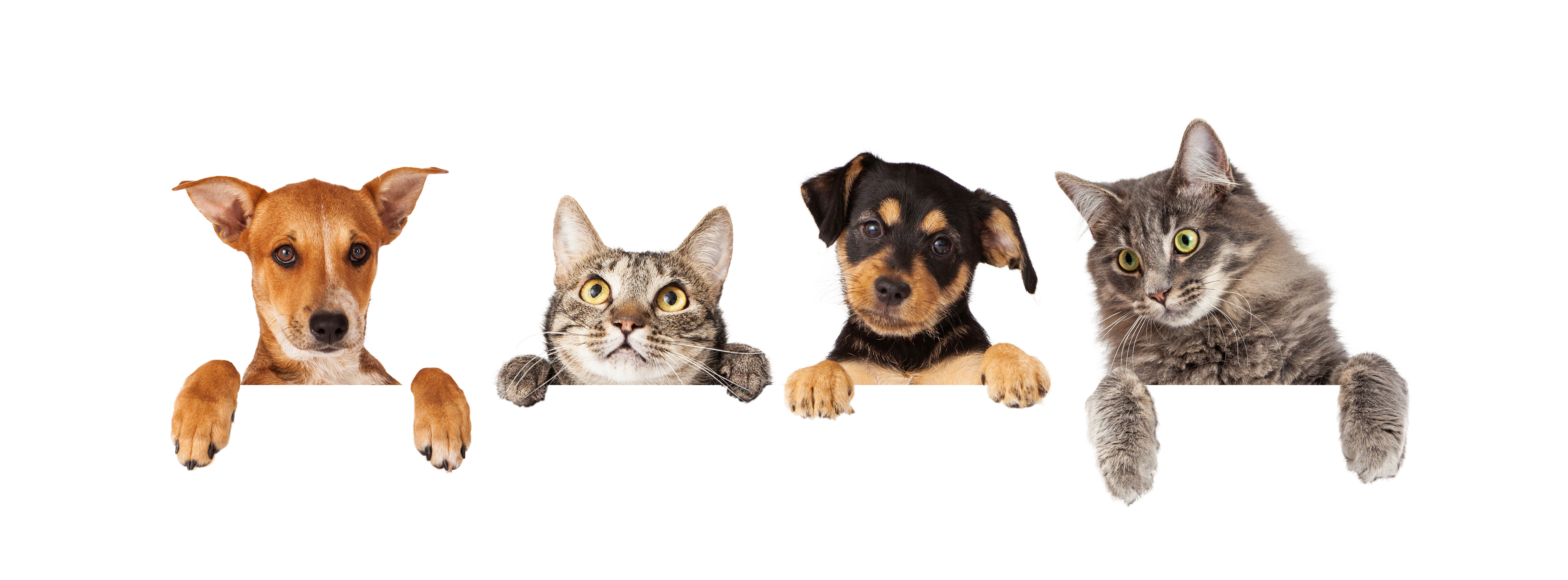 Member input sought for RSPCA submission