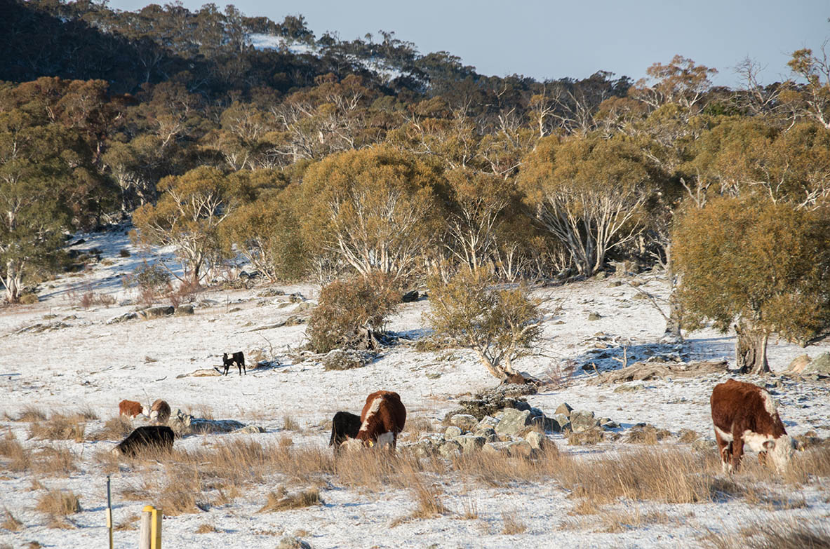 Grazing licence policy not in line with legislation