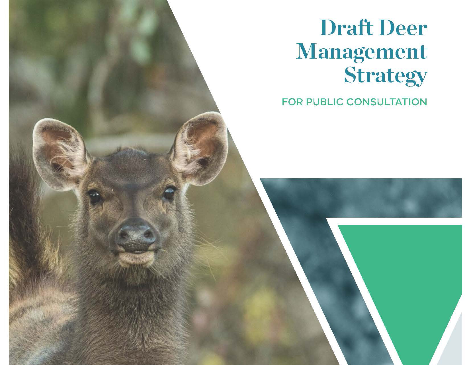 Have your say on deer management