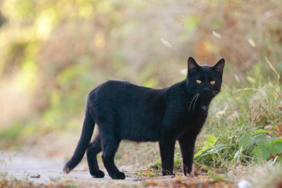 National Feral Cat Management Survey