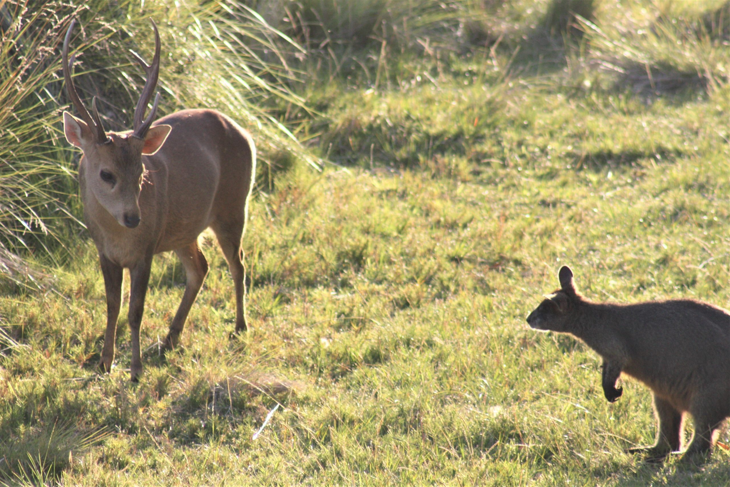 SSAA Victoria Provides Submission for the Independent Review of Victoria's Wildlife Act 1975
