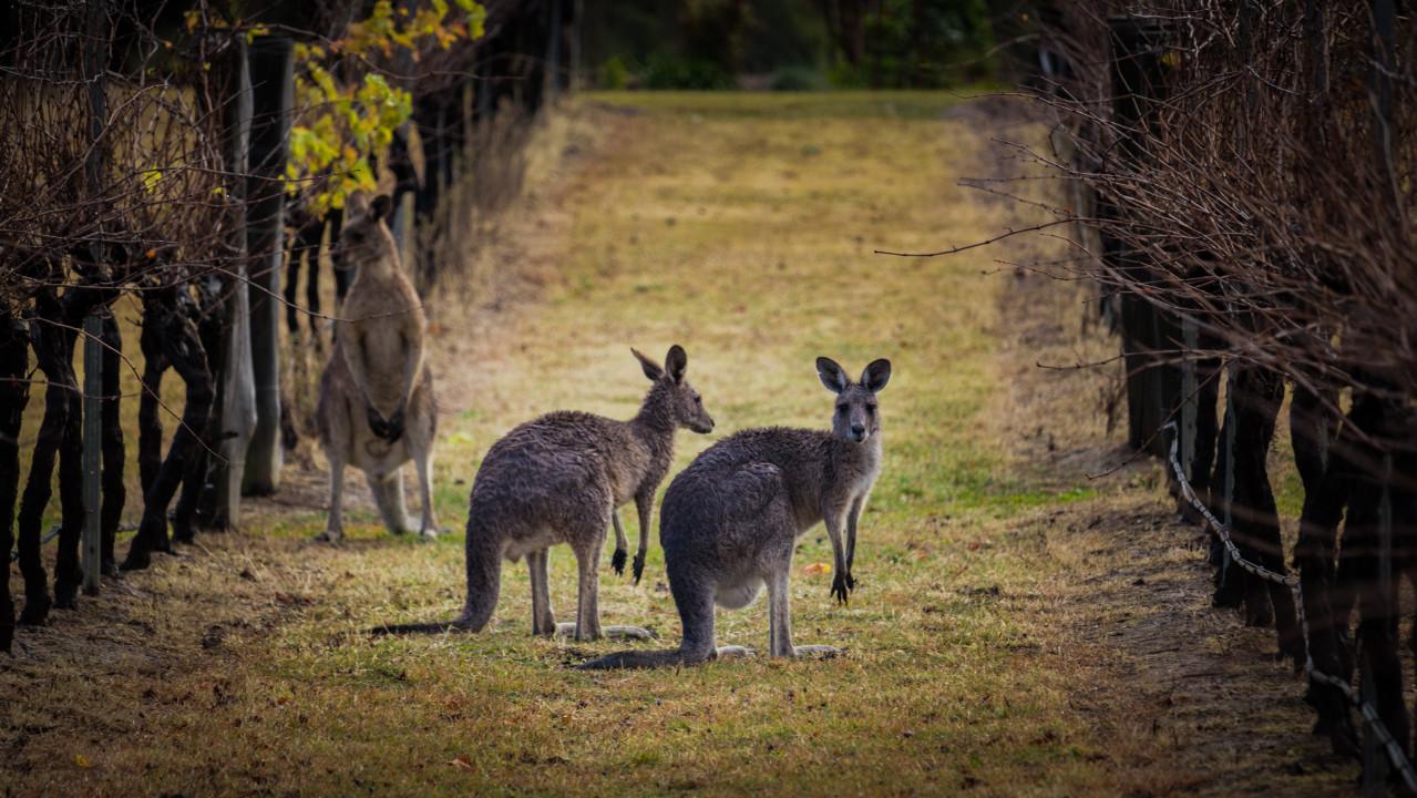 Kangaroo Course